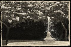 A wonderful nice black and white  photo of flowers, trees and a fountain a garden in a frame,  used as illustration, wallpaper, ab