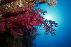 Wonderful nice gorgonians Royalty Free Stock Photo