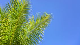 Wonderful palm trees in the blue sunny sky royalty free stock images