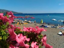 Sealandscape of Norsi on Elba Island, Italy. Wonderful panorama from Norsi beach. Pink flowers in the foreground. This place is located on Elba Island, in royalty free stock photos