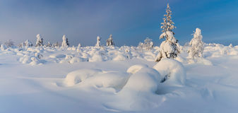 Wonderful Panoramic Landscape of Northern Winter Nature Royalty Free Stock Photo