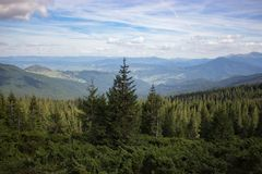 Wonderful panoramic view of Carpathians mountains, Ukraine. Evergreen forest hills. Coniferous forest. Wonderful panoramic view of Carpathians mountains stock images