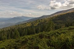 Wonderful panoramic view of Carpathians mountains, Ukraine. Mount Hoverla with big evergreen forest hill foreground. Carpathians bsckground. Scenic mountains royalty free stock image