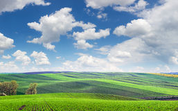 Wonderful panoramic view of fields in beautiful colorful and str Royalty Free Stock Photos