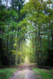 Wonderful path in the forest ,Europe Stock Photo