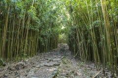 Wonderful path through tall bamboo trees, Maui, Hawaii. Wonderful path through tall bamboo trees, Maui in Hawaii royalty free stock photos