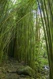 Wonderful path through tall bamboo trees, Maui, Hawaii. Wonderful path through tall bamboo trees, Maui in Hawaii stock photos