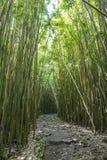 Wonderful path through tall bamboo trees, Maui, Hawaii. Wonderful path through tall bamboo trees, Maui in Hawaii royalty free stock image