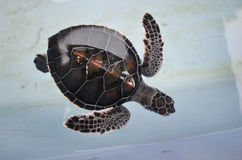 Wonderful pattern of sea turtle top view Stock Photography