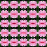 Wonderful of petal Hibiscus flower seamless. Pink hibiscus flower in full bloom seamless use as pattern and wallpaper vector illustration