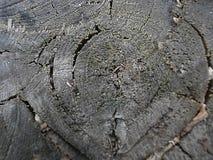 Background tree 0002 Royalty Free Stock Photo