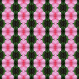 Wonderful of pink Hibiscus flower seamless. Pink hibiscus flower in full bloom seamless use as pattern and wallpaper stock illustration
