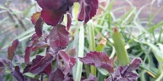 wonderful plant royalty free stock images