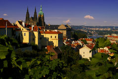 Wonderful Prague cityscape with Cathedral. Prague and the fortress cathedral as the sun sets with grape leaves in the foreground Stock Photos