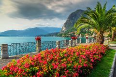 Colorful flowers and spectacular park, Lake Como, Lombardy region, Italy. Wonderful promenade with colorful flowers in public park and palm trees on the shore royalty free stock image