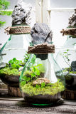 Wonderful rain forest in a jar as new life concept. On wooden table Stock Photos