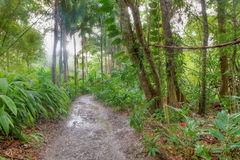 Wonderful rainforest scenery Stock Photos