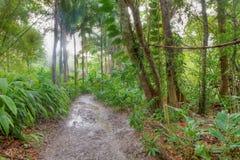 Wonderful rainforest scenery Stock Photos