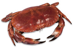 Wonderful red cooked crab Royalty Free Stock Photography