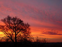 A wonderful red evening sky Stock Images