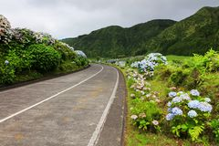 Wonderful road in Sao Miguel Island. Hortensias boarding the road in the volcanic crater lake of Sete Citades in Sao Miguel Island of Azores Portugal royalty free stock photos