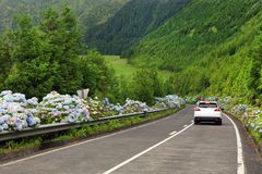 Wonderful road in Sao Miguel Island Stock Images