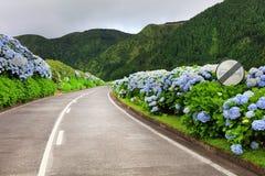 Wonderful road in Sao Miguel Island stock photo