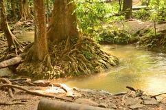 Wonderful root of tree. Wonderful plenty root on the ground Royalty Free Stock Images