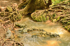 Wonderful root of tree. Wonderful plenty root with little canal Royalty Free Stock Photography