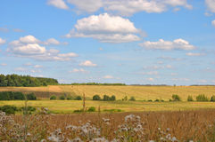 Wonderful rural summer landscape: bright blue sky and drenched summer sun fields, Russia Stock Image