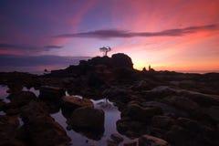 Isolated tree Wonderful scenery at Labuan Island royalty free stock image