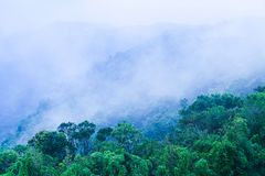 Wonderful scenery of primary forest in blue misty. Fresh wild flowers are in bloom foregrounds. Preah Monivong Bokor National Park, Kampot, Cambodia royalty free stock photos