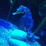 Wonderful sea horse. royalty free stock photos