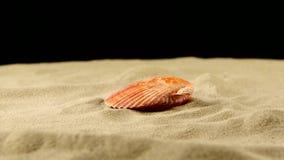 Wonderful sea shell, pink, on sand, black, shadow stock footage