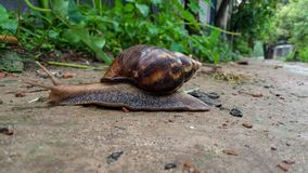 Wonderful snail with a nice natural background. royalty free stock photos