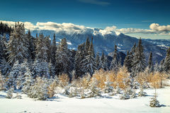 Wonderful snowy winter landscape,Poiana Brasov,Carpathians,Transylvania,Romania,Europe Royalty Free Stock Photo