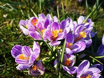 Wonderful spring flowers. In the garden stock photo