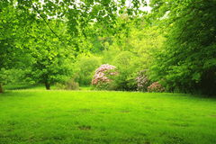 Wonderful, spring garden 2. Wonderful, spring garden with flowers and trees, Scotland Royalty Free Stock Photos