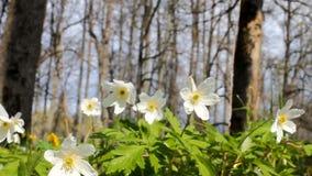 Wonderful spring mood stock video footage