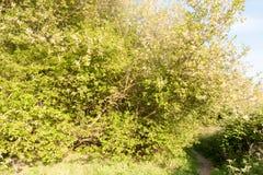 A wonderful spring scene of serene beauty pathway to walk throug Royalty Free Stock Image