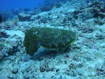 Wonderful submarine life in Bali royalty free stock photos