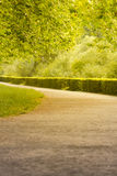 Wonderful summer alley. The warm summer sun shines through the trees of a beautiful avenue Stock Photo
