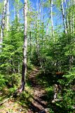 Wonderful summer day: Beautiful hiking trail in the canadian forest.  royalty free stock photography