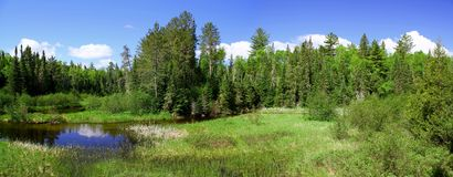 Wonderful summer day: Beautiful pond in the canadian forest. Wonderful summer day: Beautiful hiking trail in the canadian forest stock photo