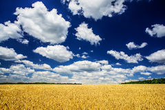Wonderful summer landscape. Stock Photography