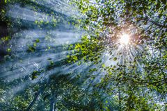 Wonderful sun rays penetrating among the branches and leaves of the broadleaf trees in deciduous forest in a hot summer day. Landscape art photography Royalty Free Stock Images