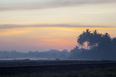 Wonderful sunrise above tropical palm jungle. With sun rays and thick morning fog Royalty Free Stock Photo
