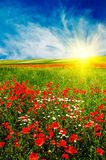 Wonderful sunset above green meadow. Stock Photography