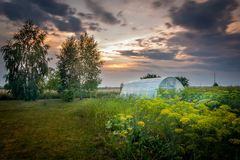 Sunset over the vegetable garden royalty free stock image