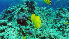 A wonderful surplus world of coral and exotic fish of Egypt stock video